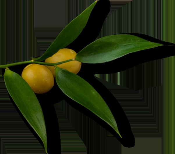 Olive Oil Tayseer Arar